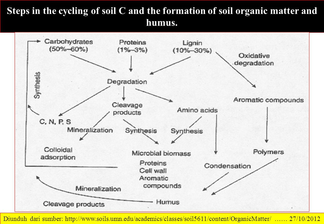 Steps in the cycling of soil C and the formation of soil organic matter and humus.