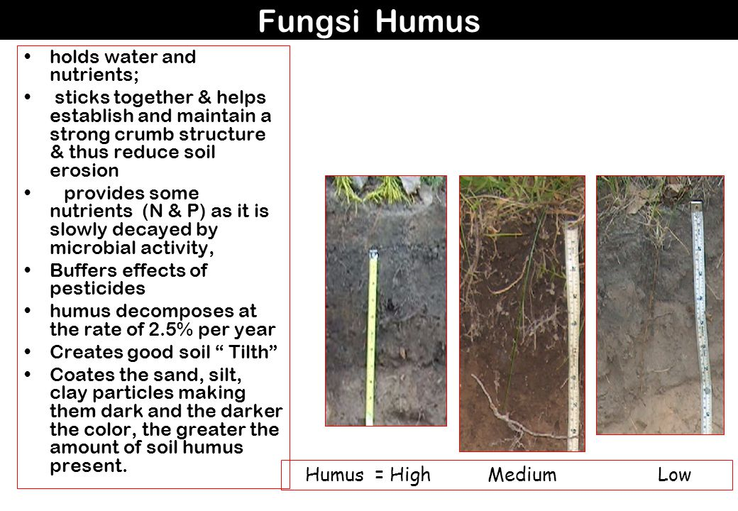Fungsi Humus holds water and nutrients;