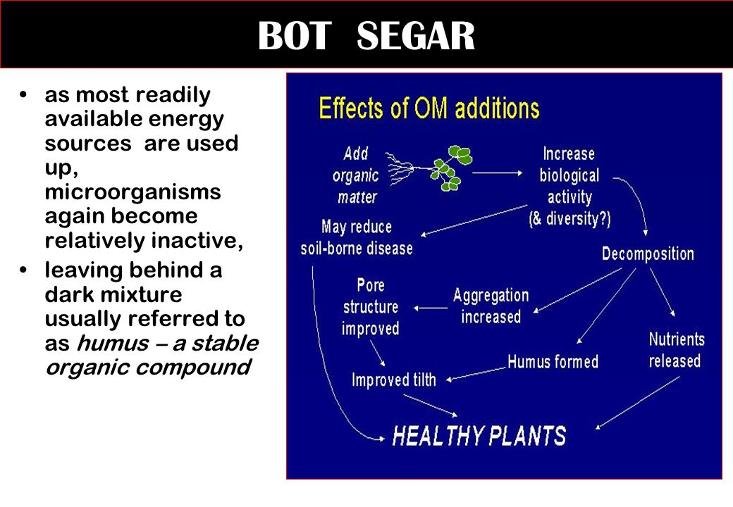 BOT SEGAR as most readily available energy sources are used up, microorganisms again become relatively inactive,