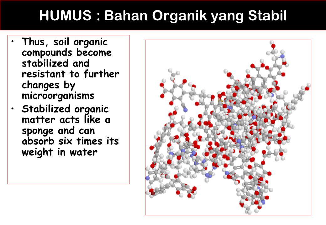 HUMUS : Bahan Organik yang Stabil