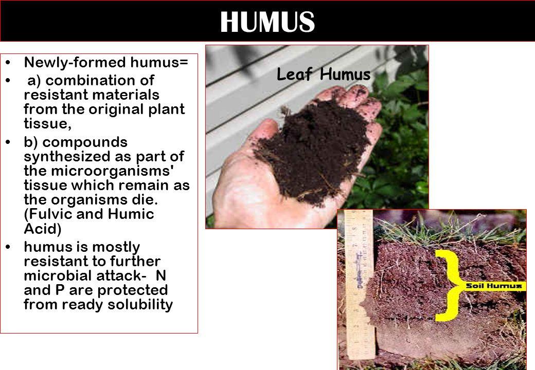 HUMUS Leaf Humus Newly-formed humus=