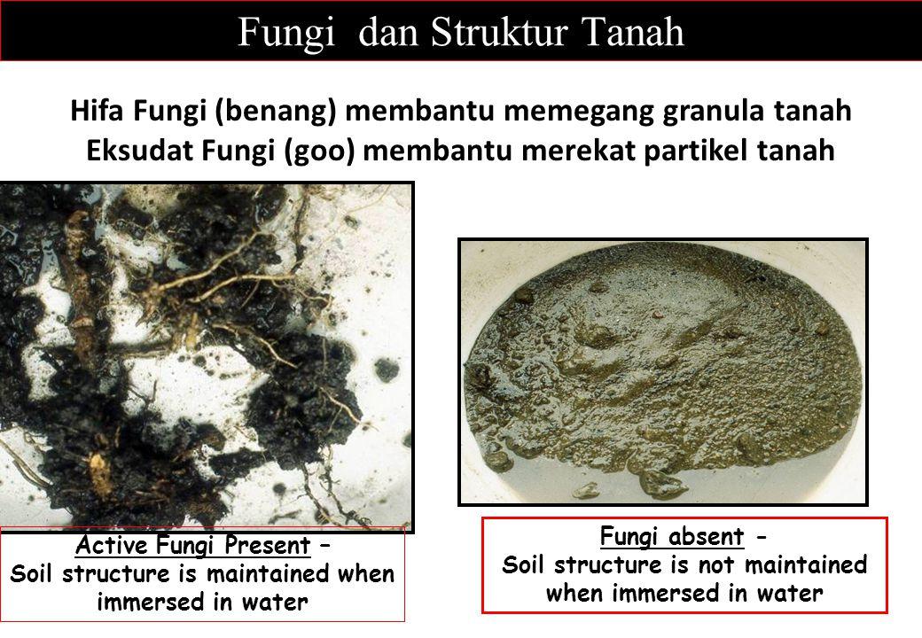 Fungi dan Struktur Tanah