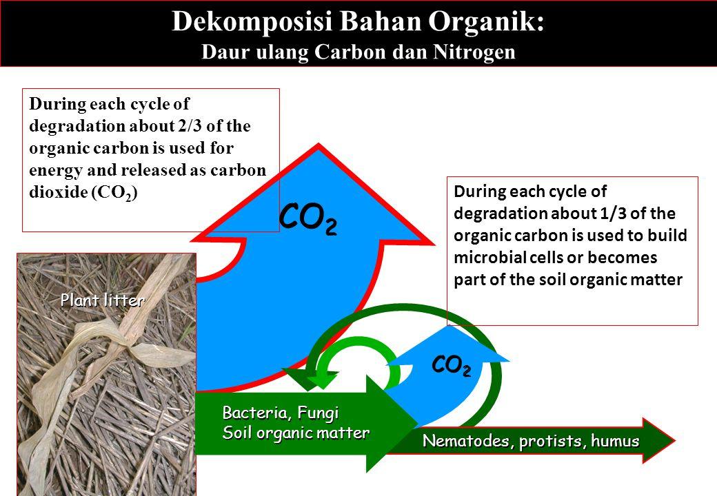 Dekomposisi Bahan Organik: Daur ulang Carbon dan Nitrogen