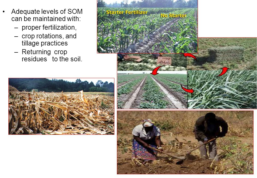 Adequate levels of SOM can be maintained with: