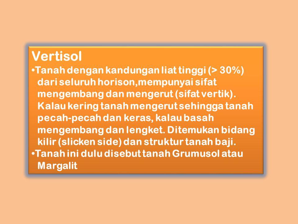 Vertisol