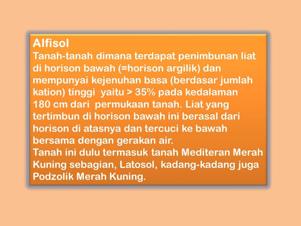 Alfisol