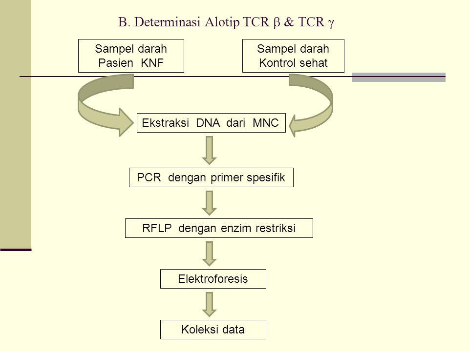 B. Determinasi Alotip TCR  & TCR γ