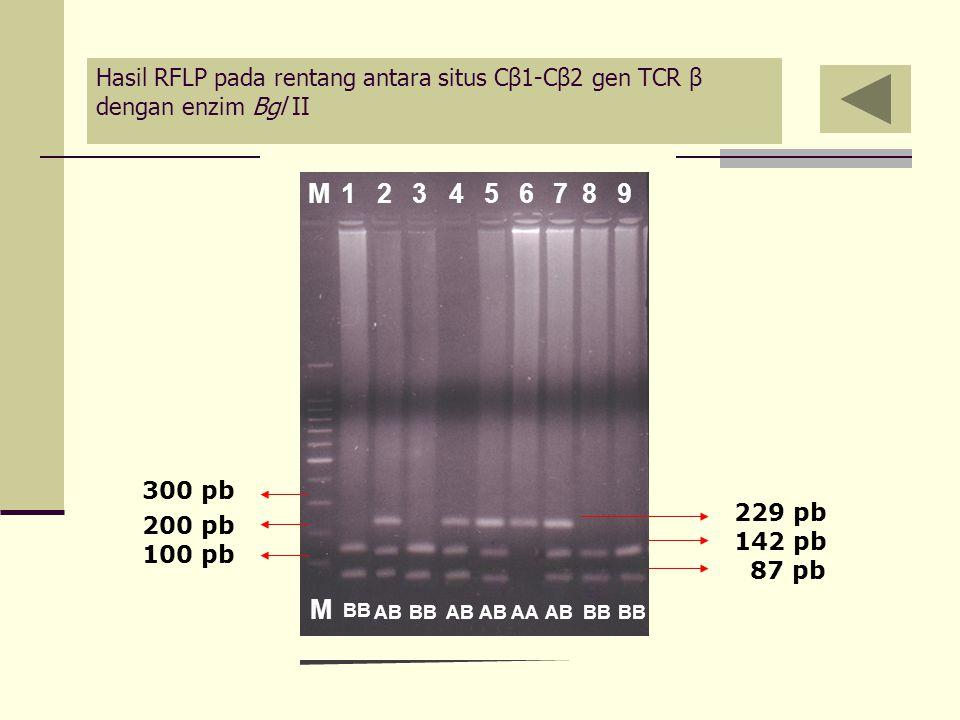 Hasil RFLP pada rentang antara situs Cβ1-Cβ2 gen TCR β dengan enzim Bgl II