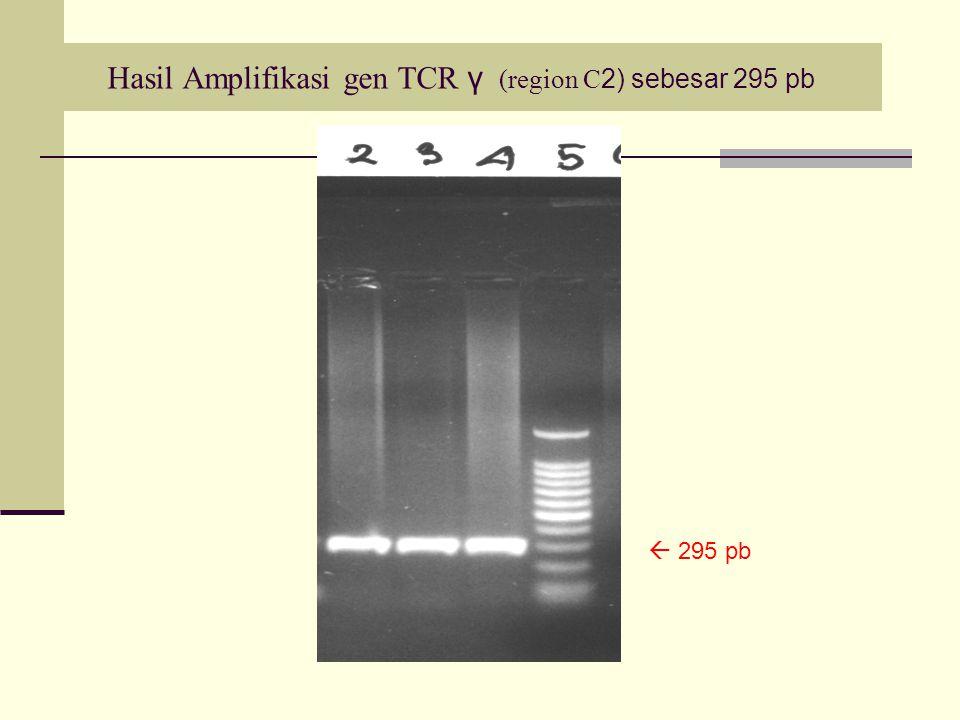 Hasil Amplifikasi gen TCR γ (region C2) sebesar 295 pb