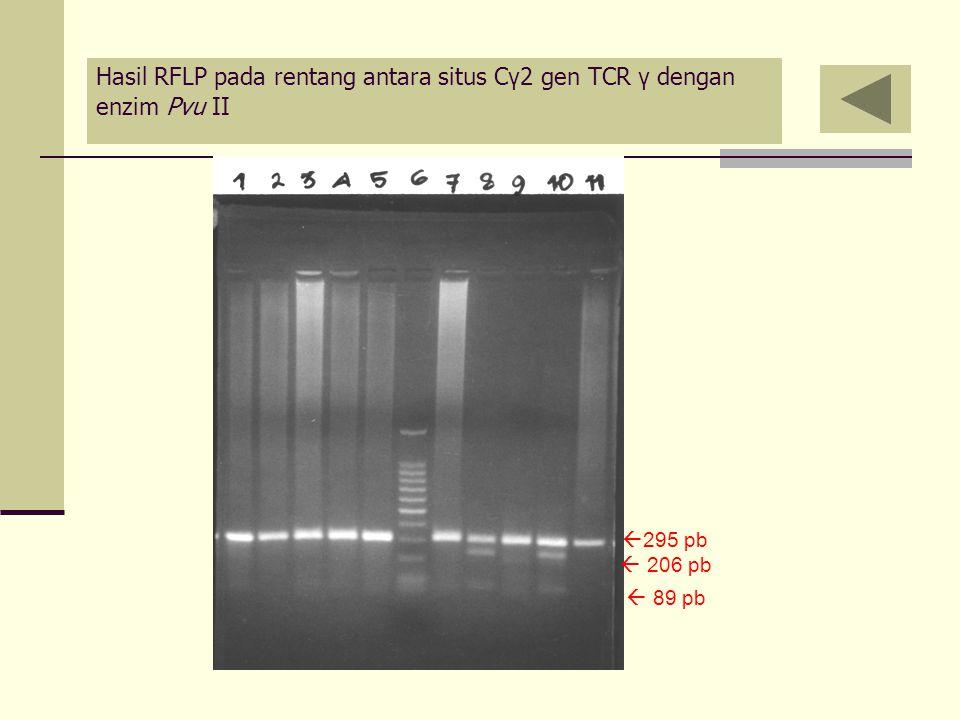 Hasil RFLP pada rentang antara situs Cγ2 gen TCR γ dengan enzim Pvu II