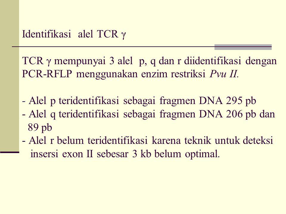 Identifikasi alel TCR γ TCR γ mempunyai 3 alel p, q dan r diidentifikasi dengan PCR-RFLP menggunakan enzim restriksi Pvu II.