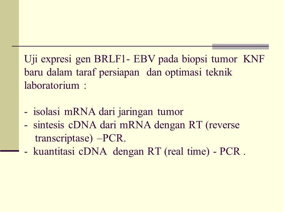Uji expresi gen BRLF1- EBV pada biopsi tumor KNF baru dalam taraf persiapan dan optimasi teknik laboratorium : - isolasi mRNA dari jaringan tumor - sintesis cDNA dari mRNA dengan RT (reverse transcriptase) –PCR.