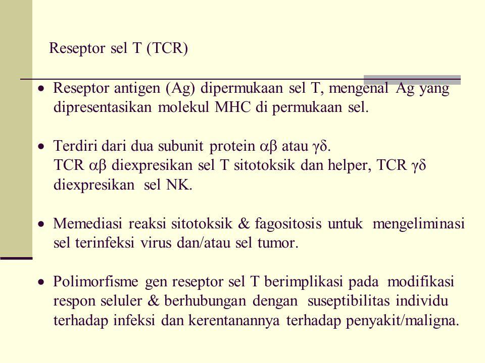 Reseptor sel T (TCR)  Reseptor antigen (Ag) dipermukaan sel T, mengenal Ag yang dipresentasikan molekul MHC di permukaan sel.