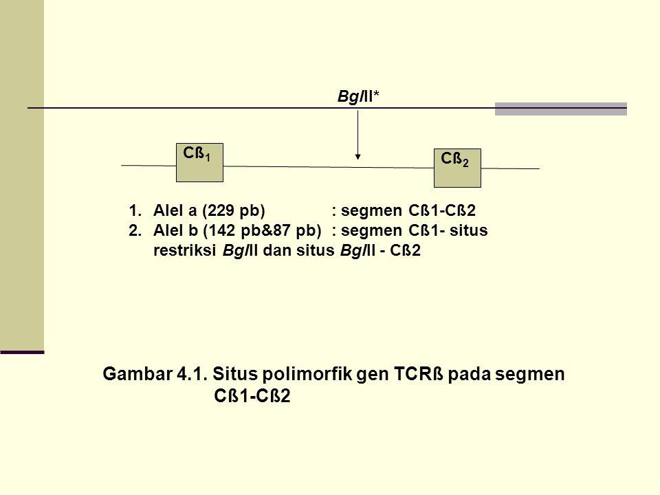 Gambar 4.1. Situs polimorfik gen TCRß pada segmen Cß1-Cß2