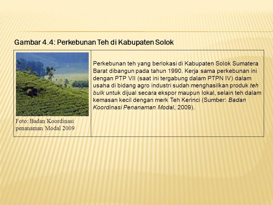 Gambar 4.4: Perkebunan Teh di Kabupaten Solok