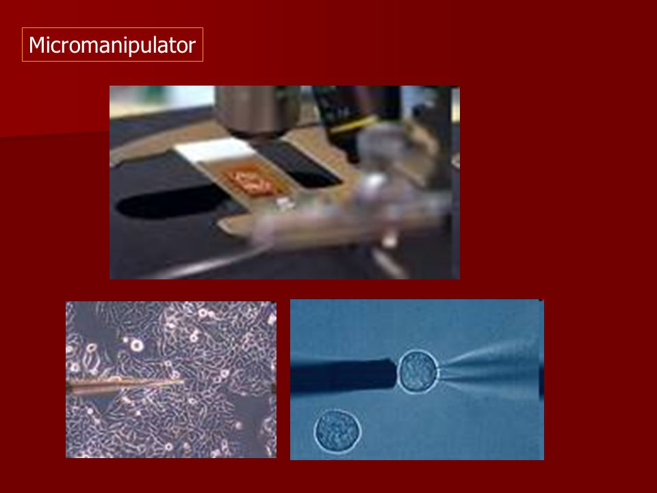 Micromanipulator
