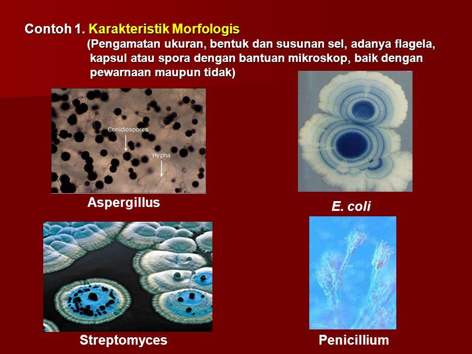 Contoh 1. Karakteristik Morfologis