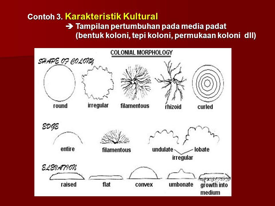 Contoh 3. Karakteristik Kultural