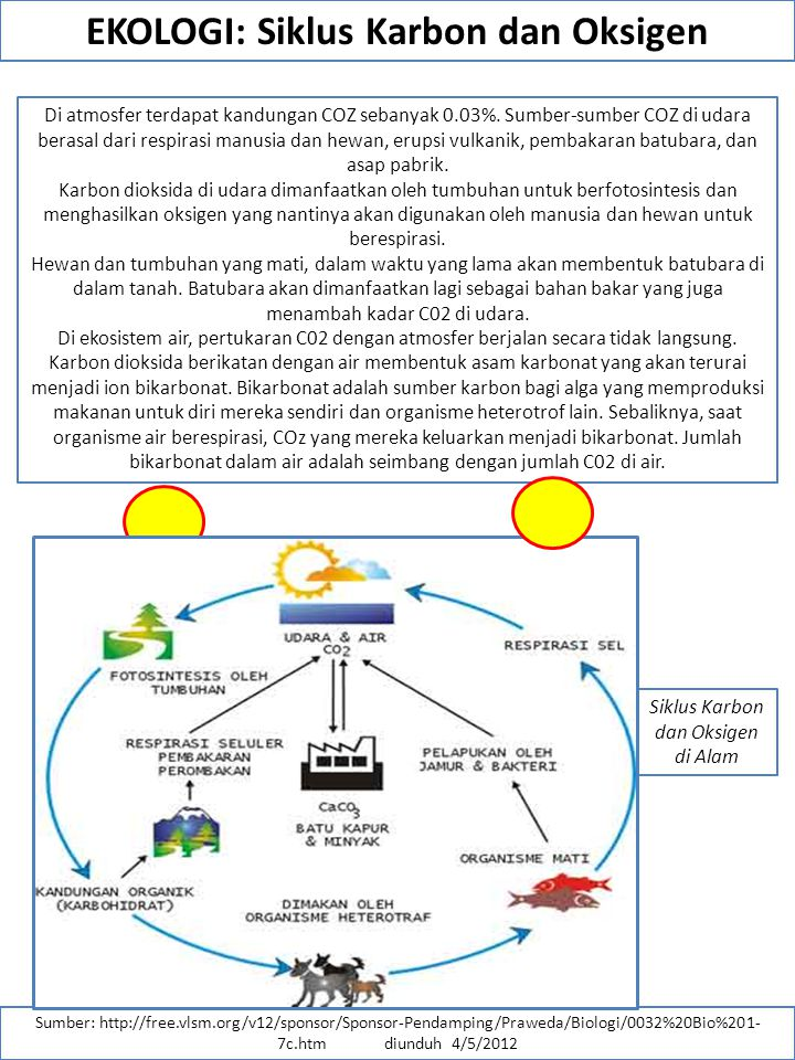 EKOLOGI: Siklus Karbon dan Oksigen