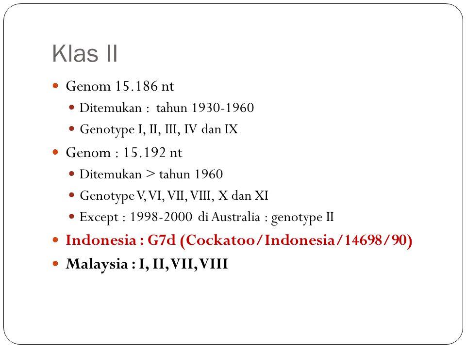 Klas II Genom 15.186 nt Genom : 15.192 nt