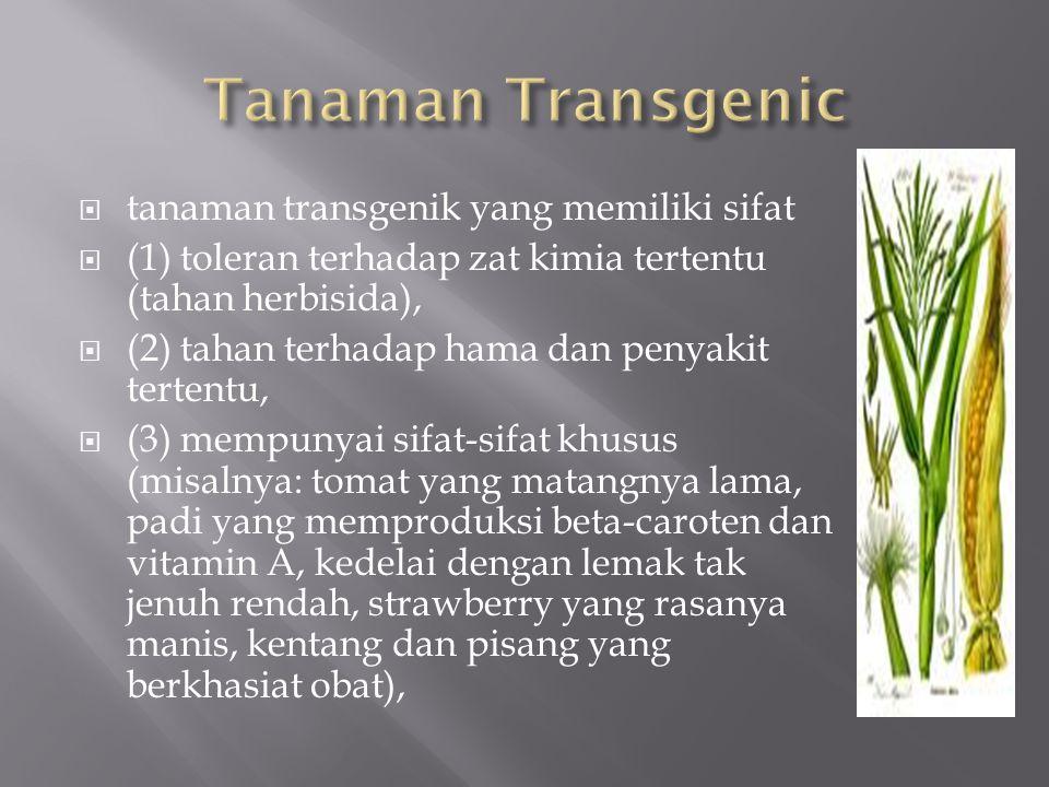 Tanaman Transgenic tanaman transgenik yang memiliki sifat