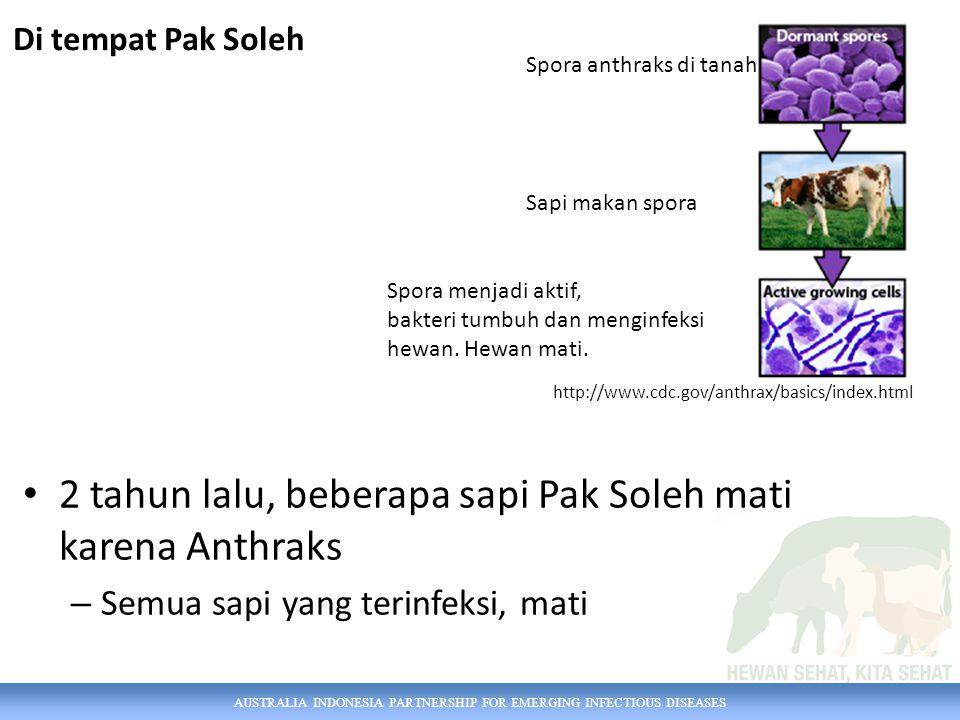 2 tahun lalu, beberapa sapi Pak Soleh mati karena Anthraks