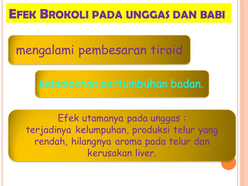 Efek Brokoli pada unggas dan babi