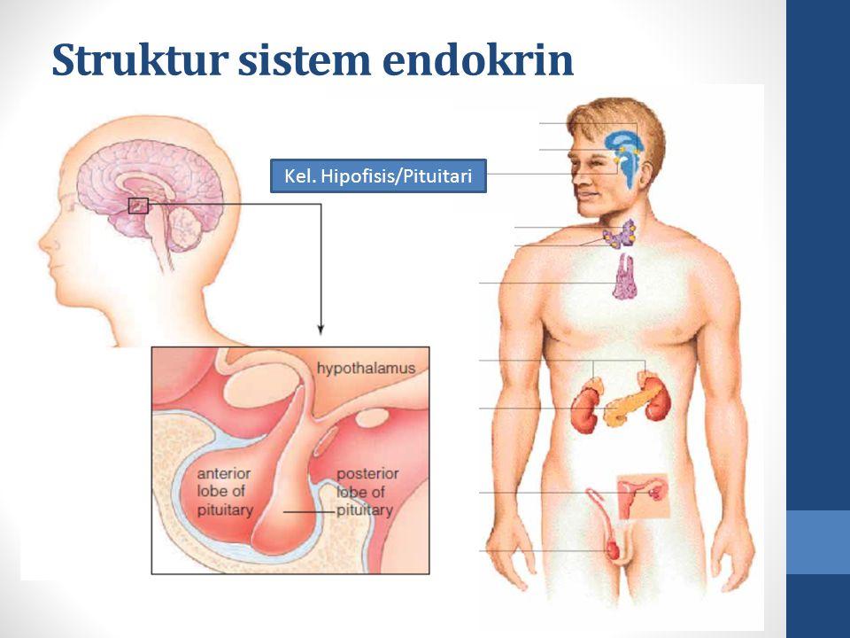 Struktur sistem endokrin