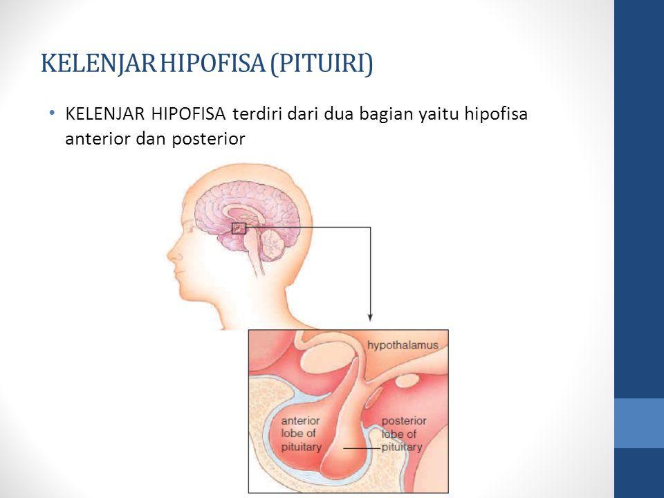 KELENJAR HIPOFISA (PITUIRI)