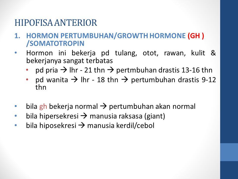 HIPOFISA ANTERIOR HORMON PERTUMBUHAN/GROWTH HORMONE (GH ) /SOMATOTROPIN.