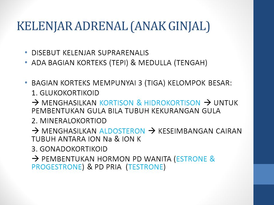 KELENJAR ADRENAL (ANAK GINJAL)