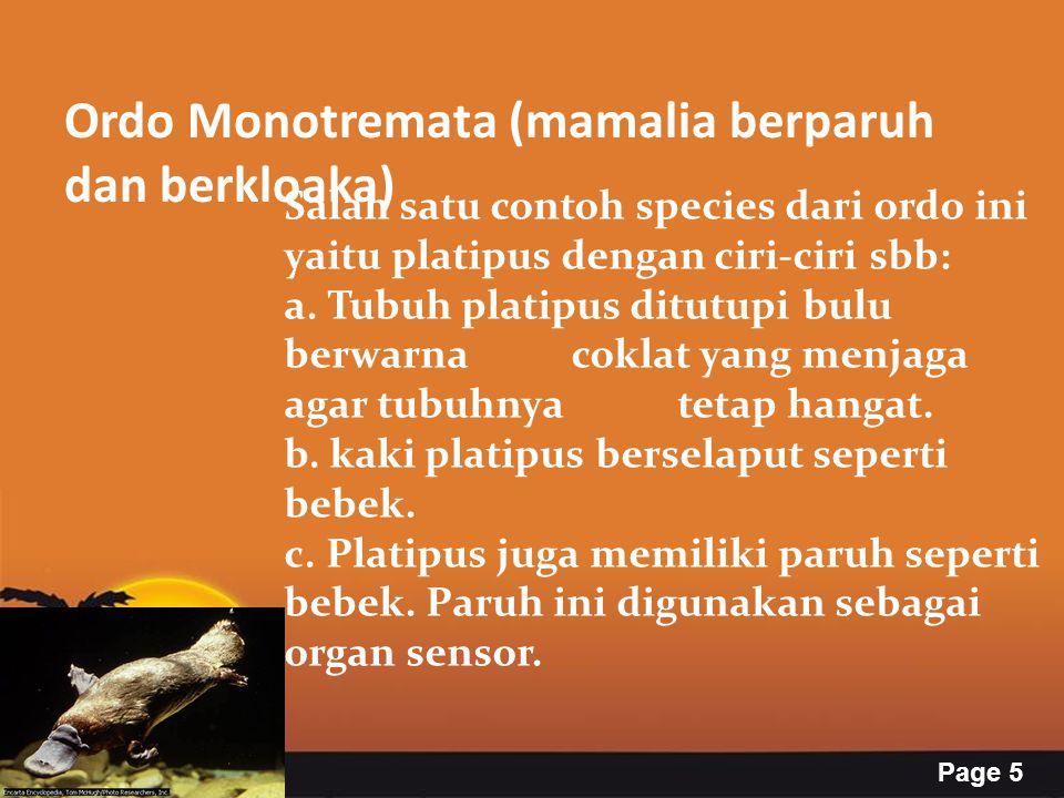 Ordo Monotremata (mamalia berparuh dan berkloaka)