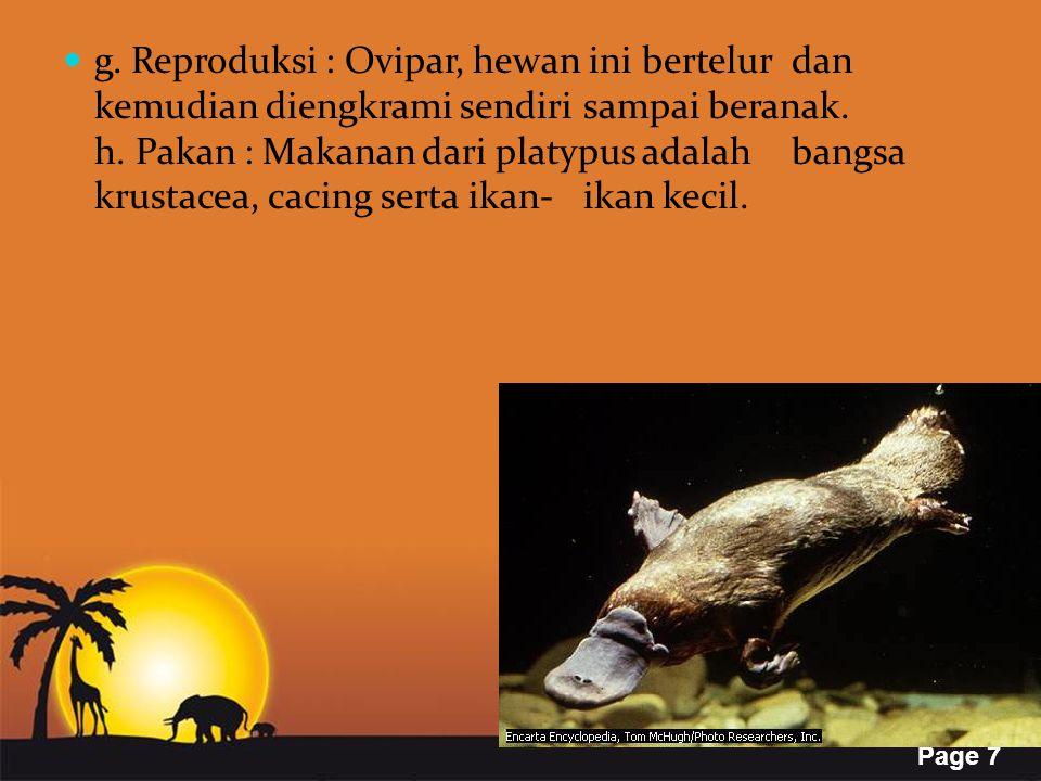 g. Reproduksi : Ovipar, hewan ini bertelur