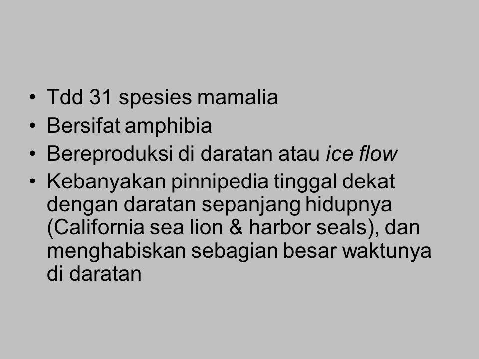 Tdd 31 spesies mamalia Bersifat amphibia. Bereproduksi di daratan atau ice flow.
