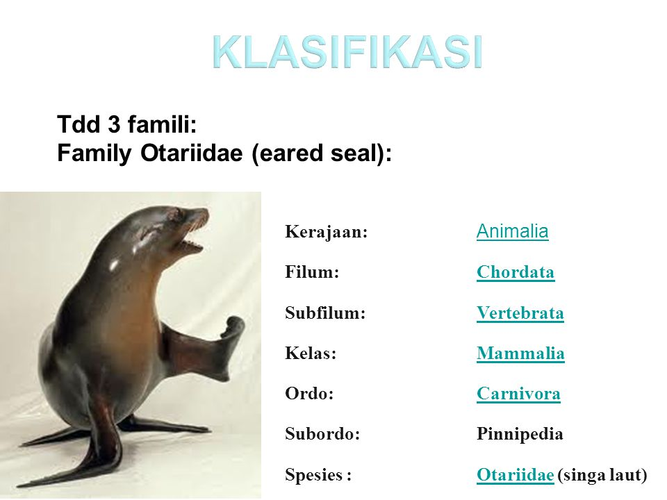 KLASIFIKASI Tdd 3 famili: Family Otariidae (eared seal): Kerajaan: