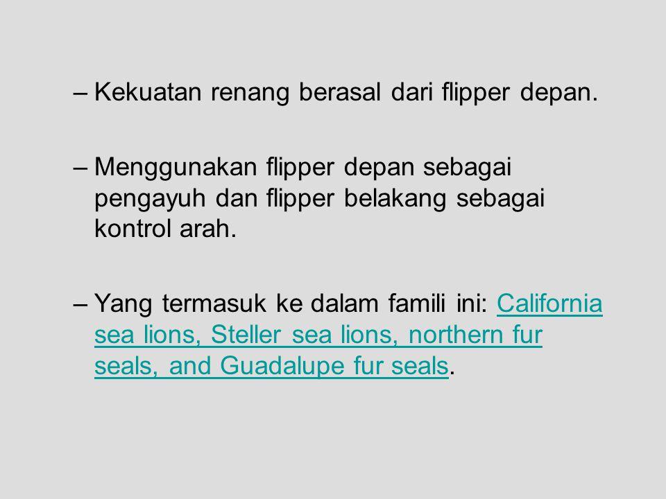 Kekuatan renang berasal dari flipper depan.