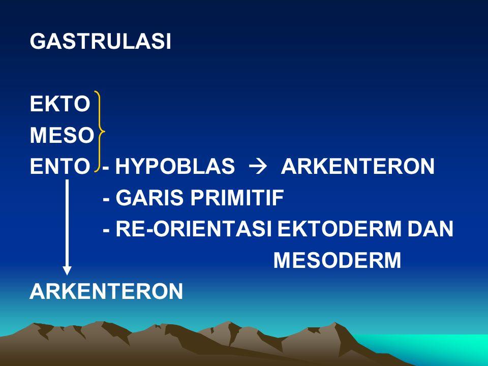 GASTRULASI EKTO. MESO. ENTO - HYPOBLAS  ARKENTERON. - GARIS PRIMITIF. - RE-ORIENTASI EKTODERM DAN.