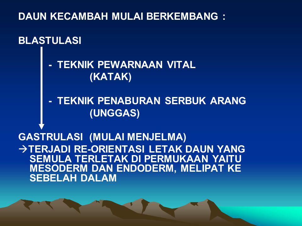 DAUN KECAMBAH MULAI BERKEMBANG :