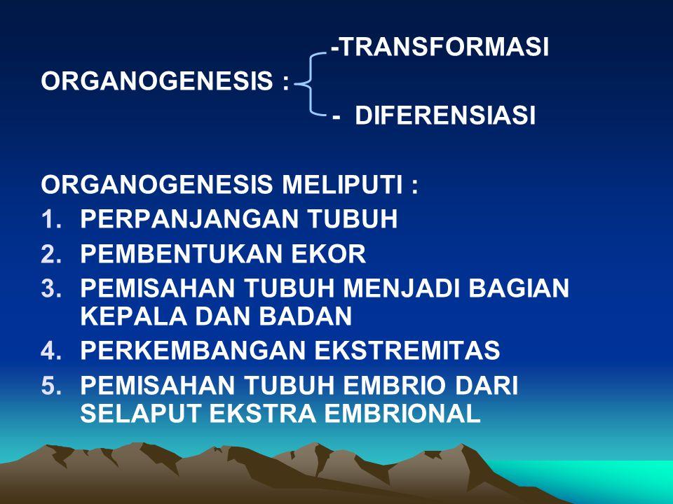 -TRANSFORMASI ORGANOGENESIS : - DIFERENSIASI. ORGANOGENESIS MELIPUTI : PERPANJANGAN TUBUH. PEMBENTUKAN EKOR.