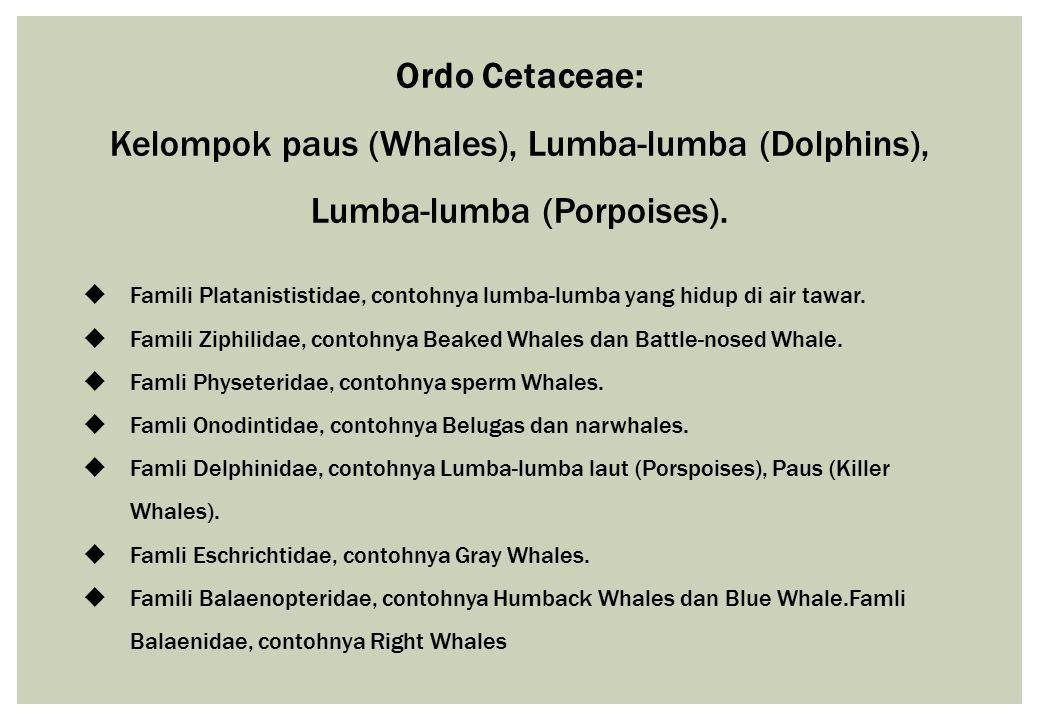 Ordo Cetaceae: Kelompok paus (Whales), Lumba-lumba (Dolphins), Lumba-lumba (Porpoises).
