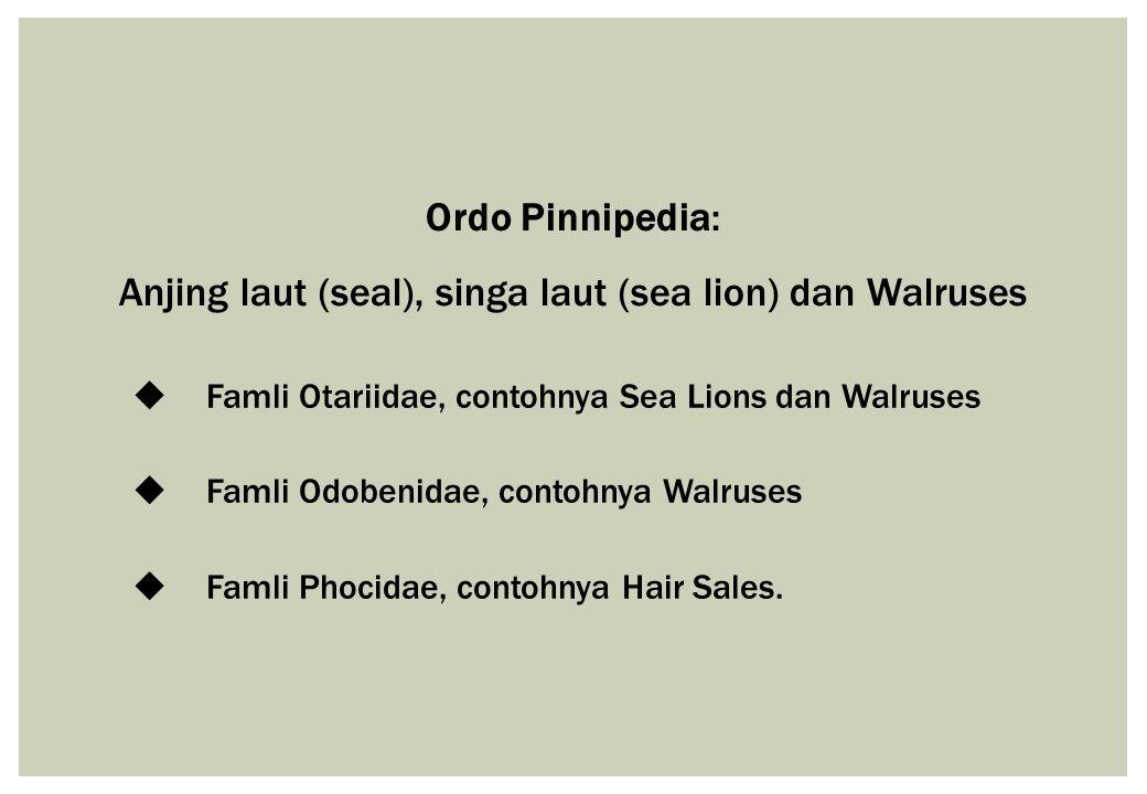 Anjing laut (seal), singa laut (sea lion) dan Walruses