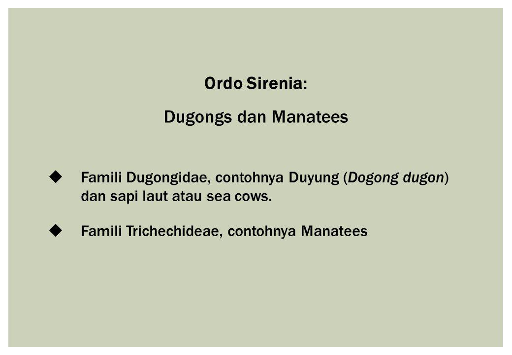 Ordo Sirenia: Dugongs dan Manatees