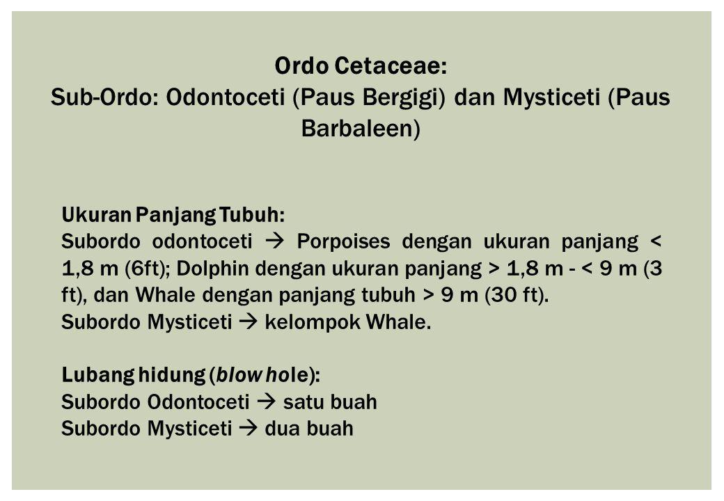 Sub-Ordo: Odontoceti (Paus Bergigi) dan Mysticeti (Paus Barbaleen)