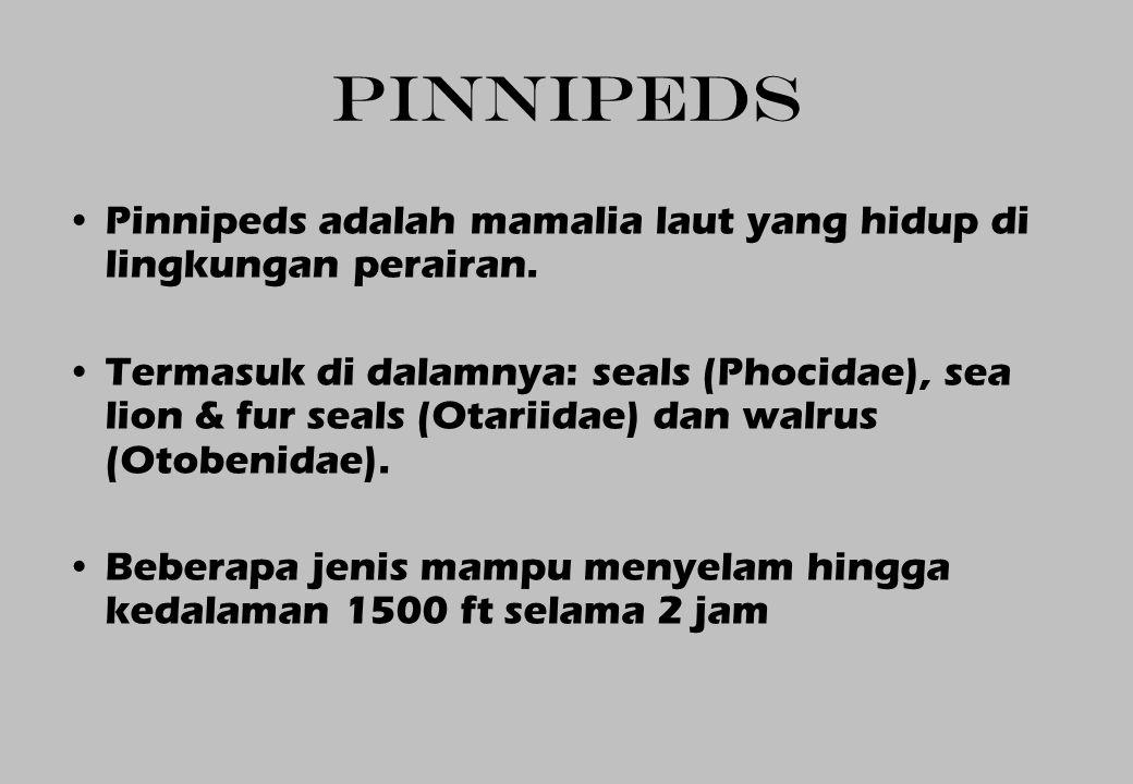 PINNIPEDS Pinnipeds adalah mamalia laut yang hidup di lingkungan perairan.