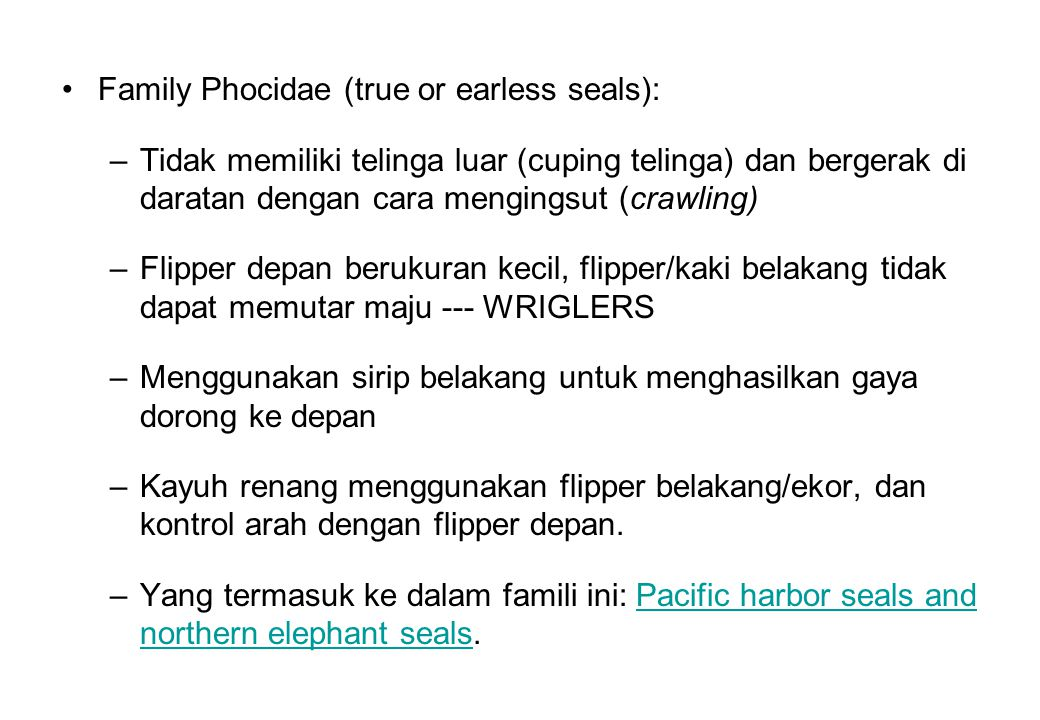 Family Phocidae (true or earless seals):