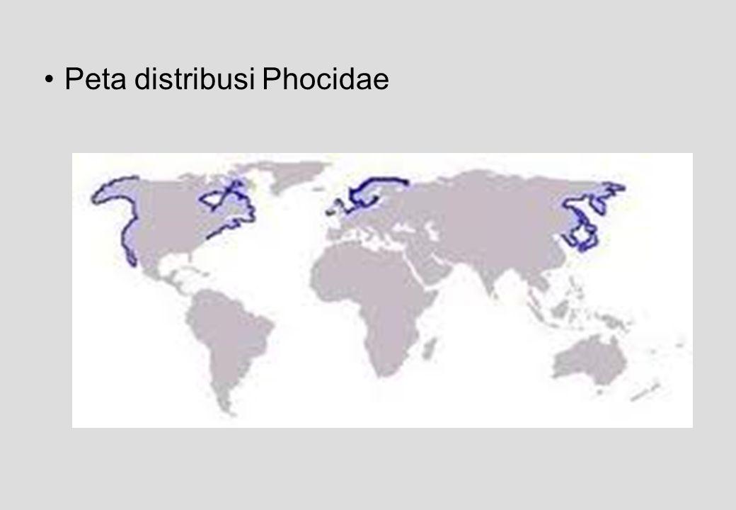 Peta distribusi Phocidae