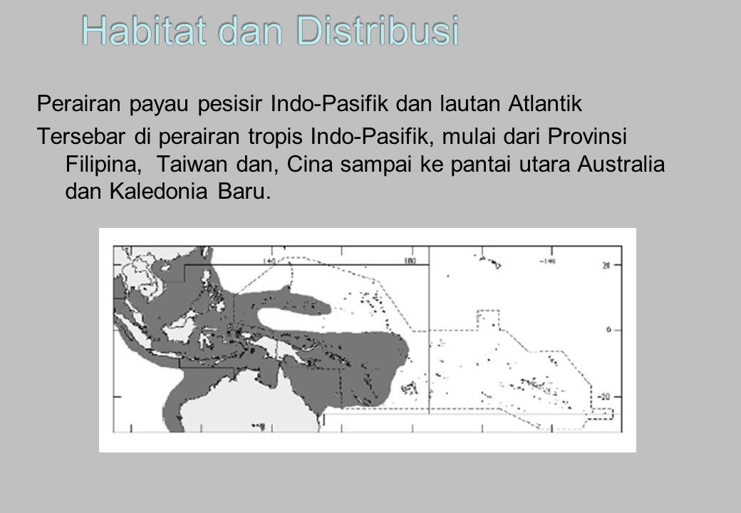 Habitat dan Distribusi