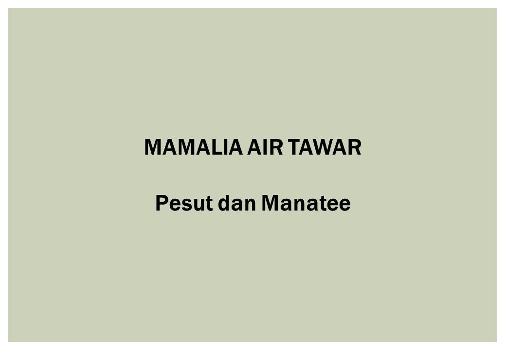 MAMALIA AIR TAWAR Pesut dan Manatee