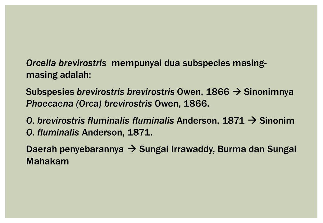 Orcella brevirostris mempunyai dua subspecies masing- masing adalah: