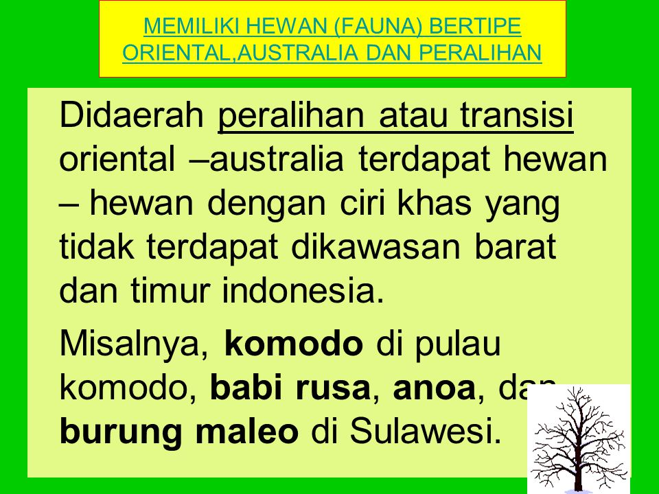 MEMILIKI HEWAN (FAUNA) BERTIPE ORIENTAL,AUSTRALIA DAN PERALIHAN